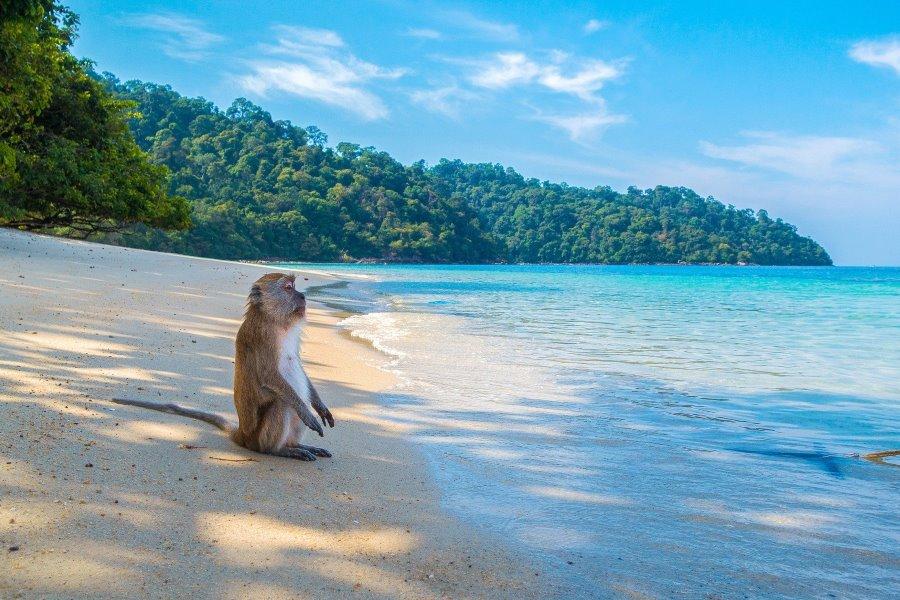 Thaïlande : les îles du sud